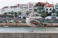 Чайка садить на насест на порте Стоковые Изображения RF