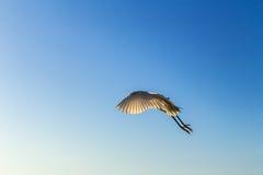 Чайка свободы Стоковое Фото
