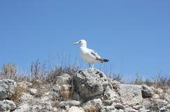 Чайка сидит на утесах против голубого неба стоковое фото