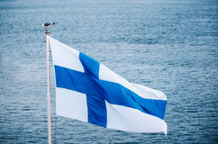 Чайка сидит на флаге Финляндии против моря стоковое изображение rf