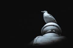 Чайка сидя на верхней части здания Стоковая Фотография RF