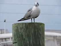 Чайка сидя на столбе Стоковое Фото