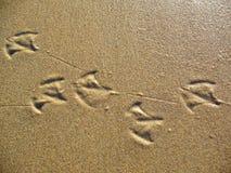чайка следов ноги Стоковые Изображения