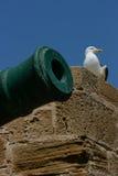 Чайка смотря на карамболь в порте Essaouira, Марокко стоковые фото