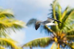 Чайка среди пальм Стоковое Изображение RF