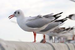 Чайка стоит на rai белого цемента моста Стоковые Фотографии RF