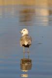 Чайка стоя в песке стоковая фотография rf