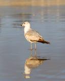 Чайка стоя в песке стоковая фотография