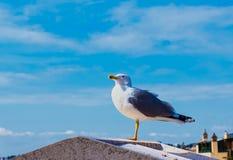 Чайка стоя на крыше Стоковые Изображения