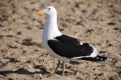 Чайка стоя на пляже Стоковые Фото