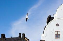 чайка урбанская Стоковое Изображение
