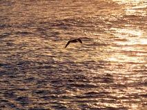 чайка Стоковая Фотография