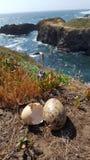 Чайка eggs океан Стоковая Фотография RF