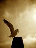 чайка morro залива Стоковая Фотография RF