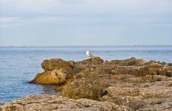 чайка seacoast Стоковое Изображение RF