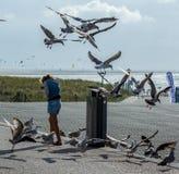 Чайки бича на пляже Стоковое Изображение