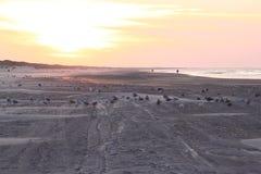 Чайки внутри во время захода солнца на пляже Ameland, Голландии Стоковые Фотографии RF