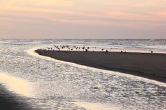 Чайки в вечере освещают на пляже Ameland, Голландии Стоковые Изображения