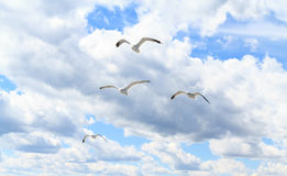 Чайки в небе Стоковое Изображение