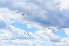 Чайки в небе Стоковая Фотография