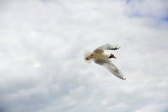 Чайки в небе Стоковые Фото