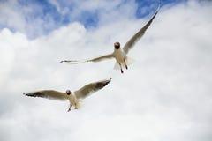 Чайки в небе Стоковые Изображения