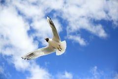 Чайки в небе Стоковая Фотография RF