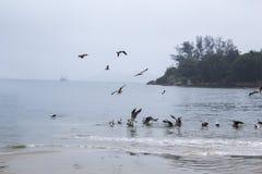 Чайки в пасмурном дне Стоковые Изображения