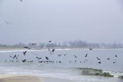 Чайки в пасмурном дне Стоковые Фотографии RF