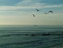 Чайки в полете Стоковые Фотографии RF