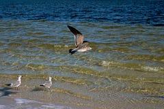 Чайки в пляже Стоковое фото RF