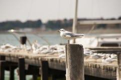 Чайки в солнце Стоковые Изображения RF