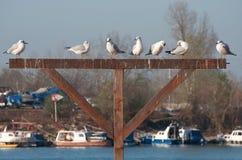Чайки города реки стоковая фотография rf