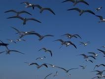 чайки группы стоковые изображения