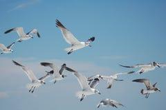 чайки группы Стоковое Изображение