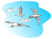 Чайки летания нося рыбу Стоковое Фото