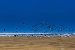 Чайки летания Стоковые Изображения RF
