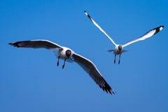 Чайки на небе Стоковая Фотография RF