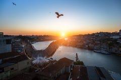 Чайки летают над рекой Дуэро во время захода солнца porto Стоковое Изображение
