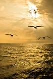 Чайки летая в небо Стоковое Изображение RF