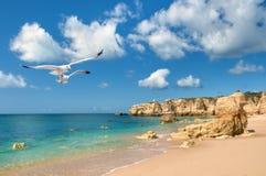 Чайки летая над золотым пляжем около Albufeira, Португалии Стоковые Фото