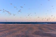 Чайки летая над пляжем стоковое фото rf