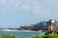 Чайки летая над ` s medina Essaouira Стоковые Изображения