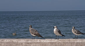 Чайки ждать в порте стоковая фотография