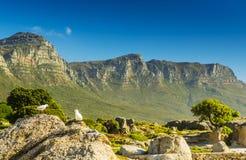 Чайки и 12 апостолов в Южной Африке Стоковые Изображения