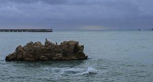 Чайки и море Стоковые Изображения