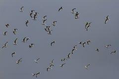 Чайки и небо Стоковые Изображения RF