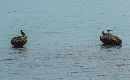 Чайки и птицы на утесах Стоковые Изображения RF