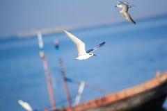 Чайки и шлюпка Стоковая Фотография