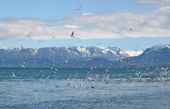 чайки ледника предпосылки Стоковое фото RF
